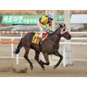 경마 관심경주, 서울 최강 스프린터 찾기