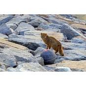 멸종위기 동물 삵 야행성 동물 종류 발견… 고양이와 다른 야행성 동물 종류 점은?