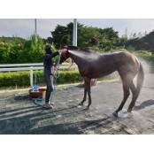 한국마사회, 말들의 여름나기 준비 분주