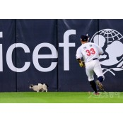 [포토] 야구장 나들이 나온 고양이! 야구장