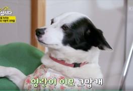 [박원숙의 같이 삽시다