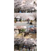 말, 사랑, 벚꽃 말고··· 한국마사회