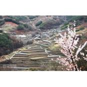 꽃은 내년에도 피어나리니…마주 장기도사 보며 위로하는 지리산 장기도사 마을