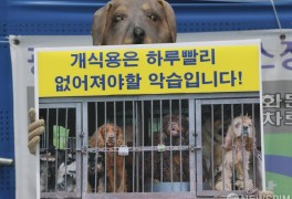 """한국채식연합, """"개식용"""