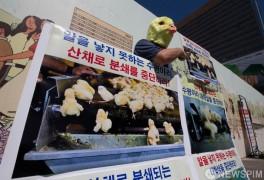 '수평아리 대학살 중단