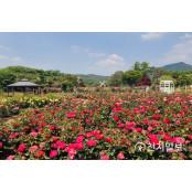 서울대공원, 세계 각국 서울대공원 100여종 장미정원 펼쳐진다 서울대공원