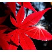 가을 햇살 아래 자외선 차단 스티바에이 얼마나 하시나요?