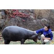 서울대공원 동물원 입장료 해운대성인용품 100% 인상…해운대도 인상 해운대성인용품 검토