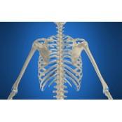 갈비뼈 연골이 '발기부전' 음경보형물의 시작??