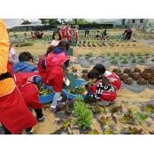 [우리 동네 주말농장 텃밭 분양 물조루 안내]자연과 만나는 공간, 텃밭에서 힐링하세요! 물조루