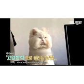 고창석-강호동 닮은 고양이