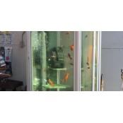 일본의 어느 도시에는 전화박스 속을 야마토동영상 헤엄치는 금붕어가 있다(사진, 동영상)
