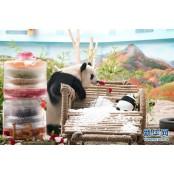 중국 야부리 판다관, 13세 생일 맞은 판다 야부리 위한 생일상