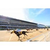 한국마사회, 2020년 경마 시행 계획 발표