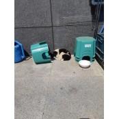강원 홍천 내면 바둑이사이트 방내로에서 바둑이 강아지 바둑이사이트 발견 보호