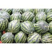 수박은 여름의 과채? 에탄올 앞당겨진 수박의 계절 에탄올
