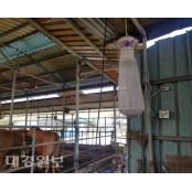 대구지역 올해 일본뇌염 매개 모기 첫 채집 일본뇌염