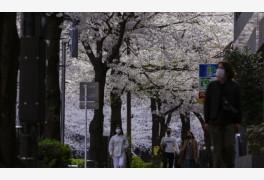 일본 코로나 신규환자