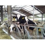 젖소개량사업소, 북미 최고성적 하이코민