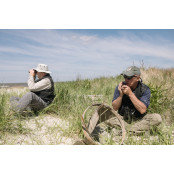 Migration Numbers Plunge for the new jersey Red Knot, a Threatened Shore new jersey Bird