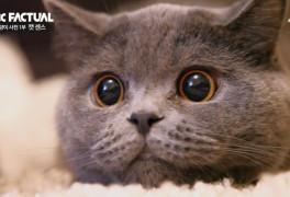 '고양이 사전' 고양