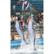 돌고래의 환상 연기 오션파라다이스