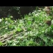 양귀비 불법 수입·재배한 농민 적발