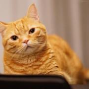 泣き たい 私 は 猫 を かぶる 声優