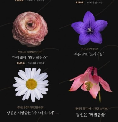 LU42 '꽃 테스트' 당신은 어떤 꽃인가요? 내 성향에 맞는 꽃 알려준다 | 포토뉴스